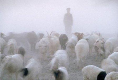 A lonely shepherd