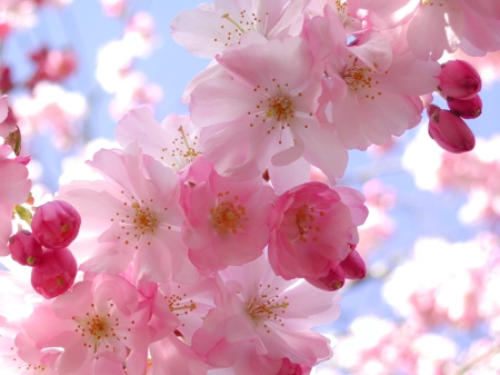 1920x1440-nature-flowers-spring-flower-desktop-wallpaper