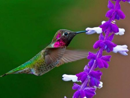 995804_602515853161084_1622661476_n  hummingbird