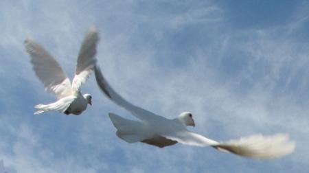 2birdsflying-web