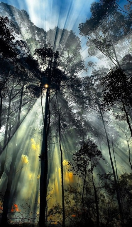amazing-forest- Light