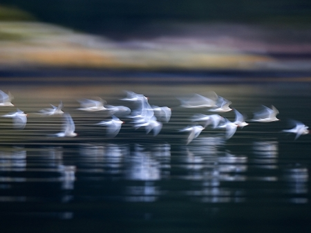 nature_birds_animals_1080x768__1600x1200_wallpaperhi.com.jpg beauty of flight