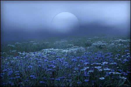 1526566_10206413877333738_2037633856212679409_n.jpg blue moon blue flowers..........mystical