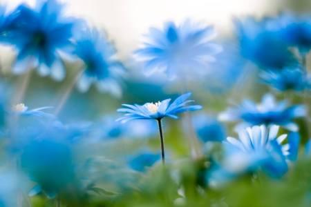 1397459_10202511259890741_466962284_o  blue flowers