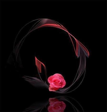 10885432_982281015119550_319106302456816511_n-jpg-rose